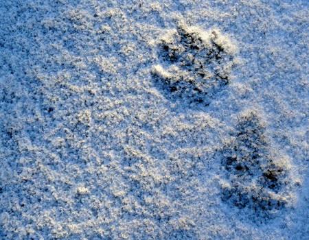 Winter traces