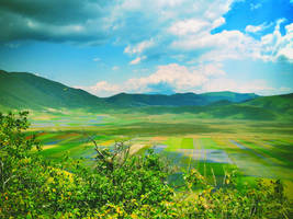 Coloured fields by deviantgiak