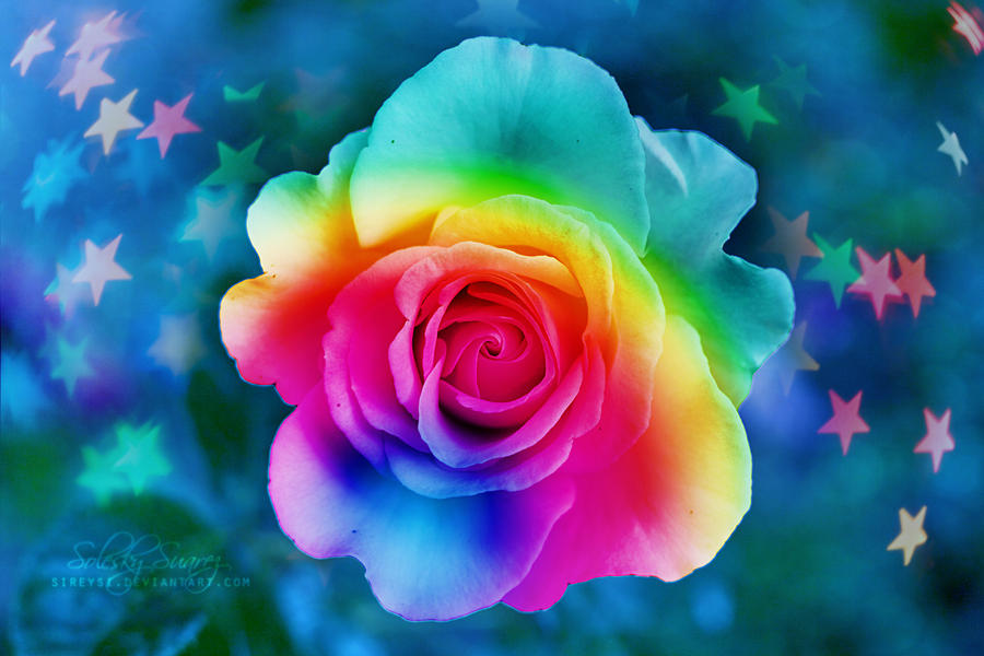 Rainbow rose by sireysi on deviantart for How much are rainbow roses