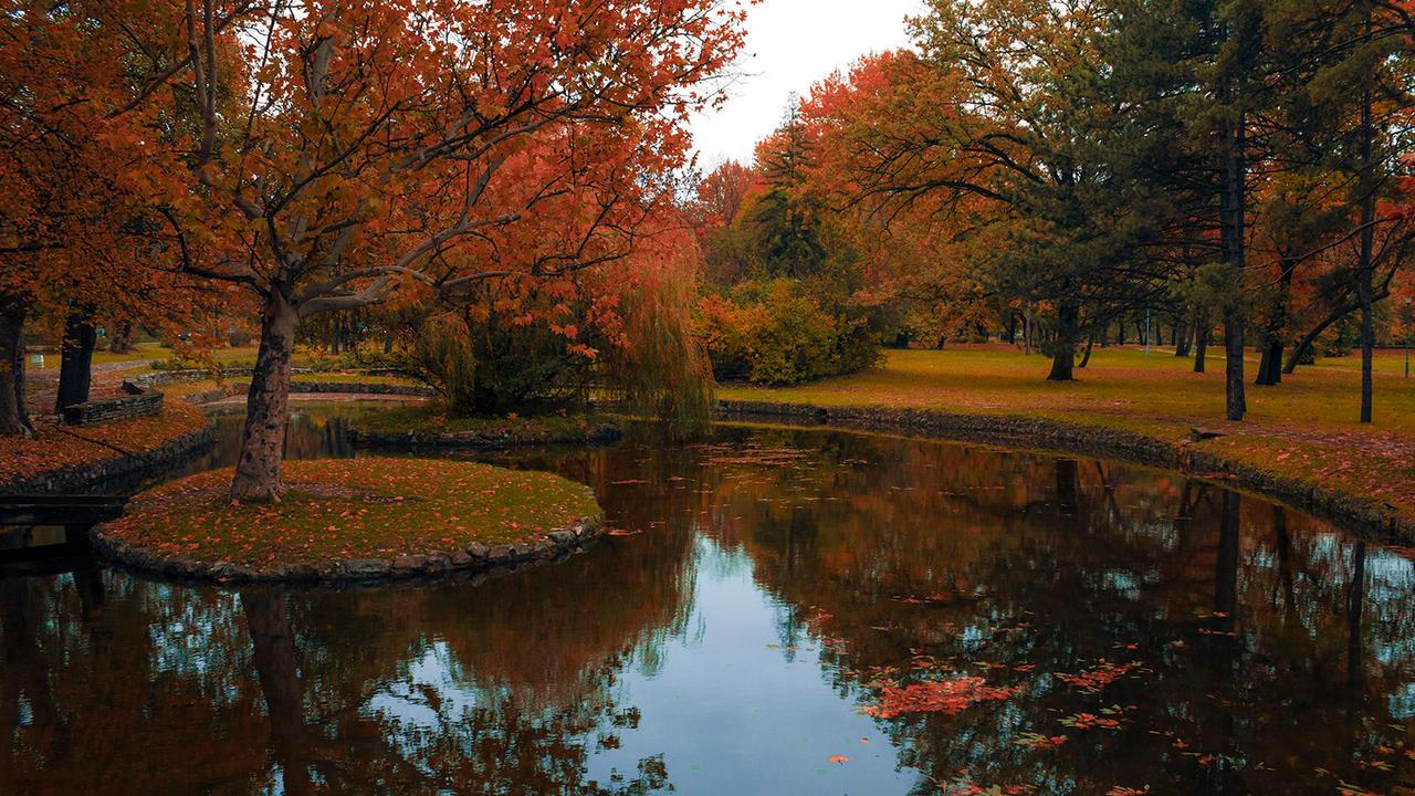 Autumn colors by MilanNikolaPetrovic