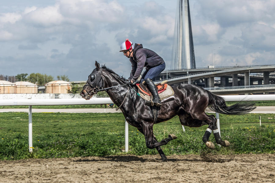 Horse rider by MilanNikolaPetrovic