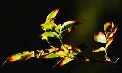 Leaves Reach by brendangillatt