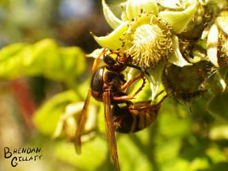 Wasp 2 by brendangillatt