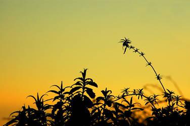Sunset Over Hedge-row by brendangillatt
