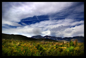 The Wild West by TashinaMarie