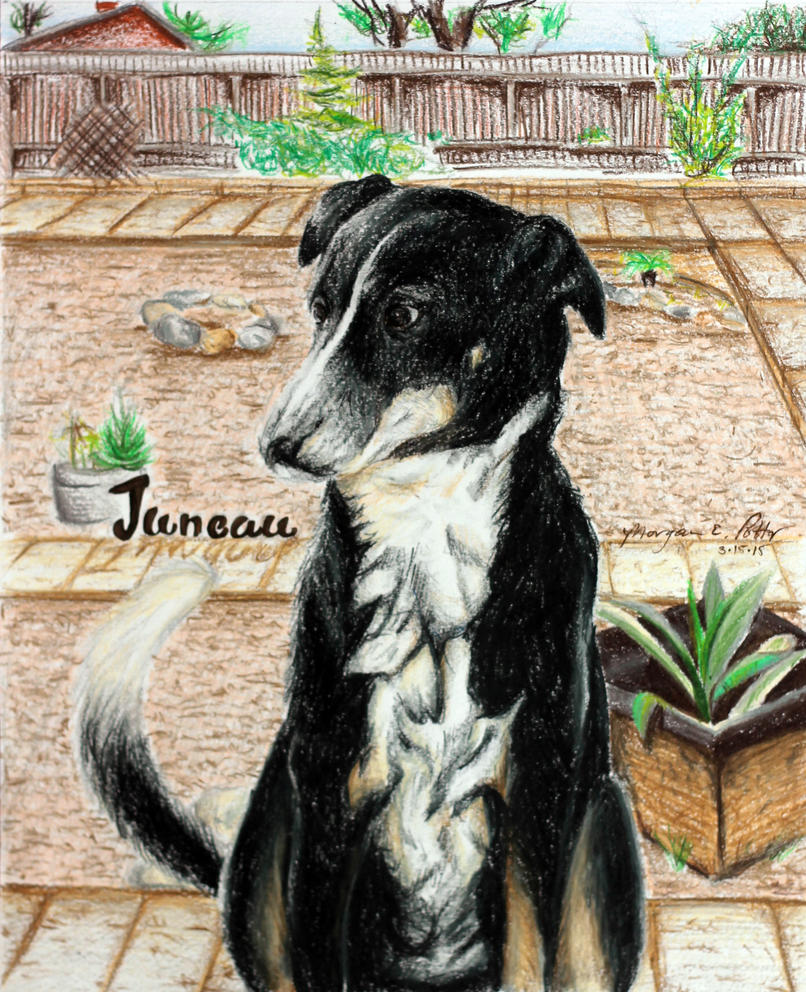 Juneau - Dog Portrait by MoPotter