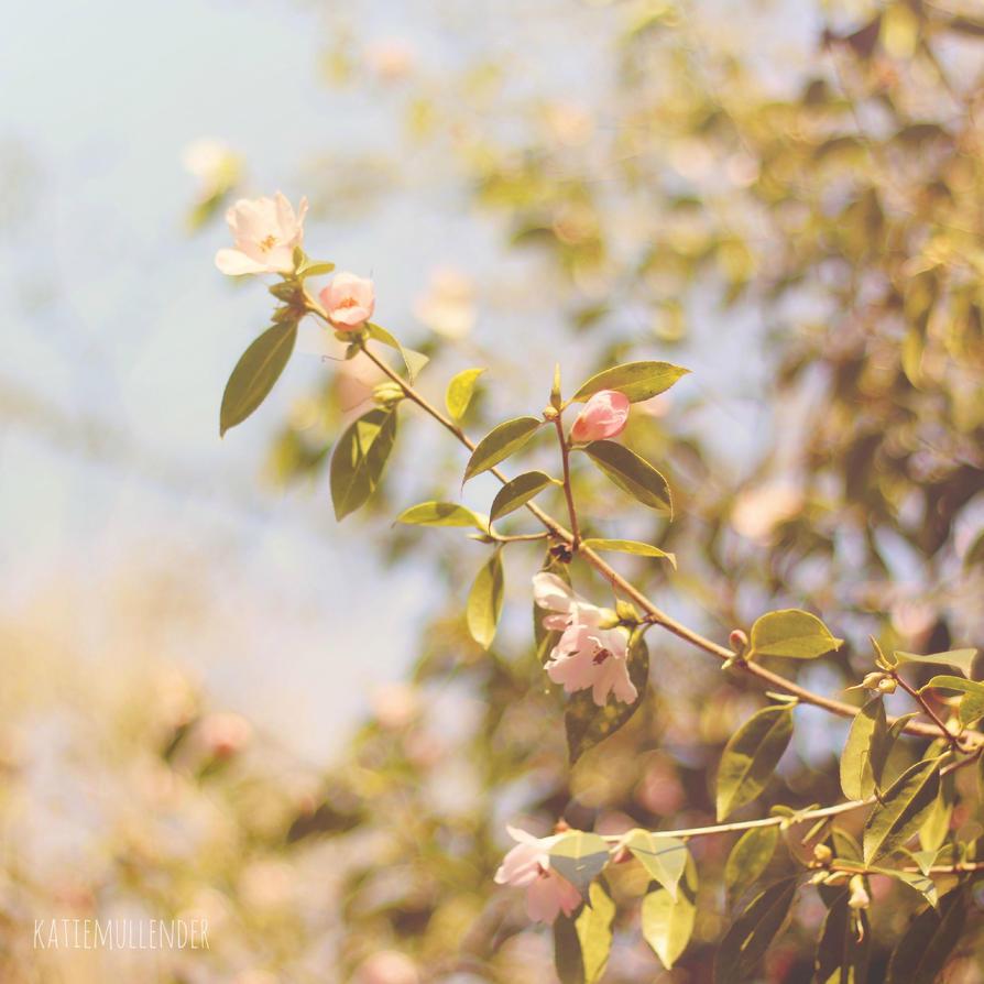 Springtime by ktmull