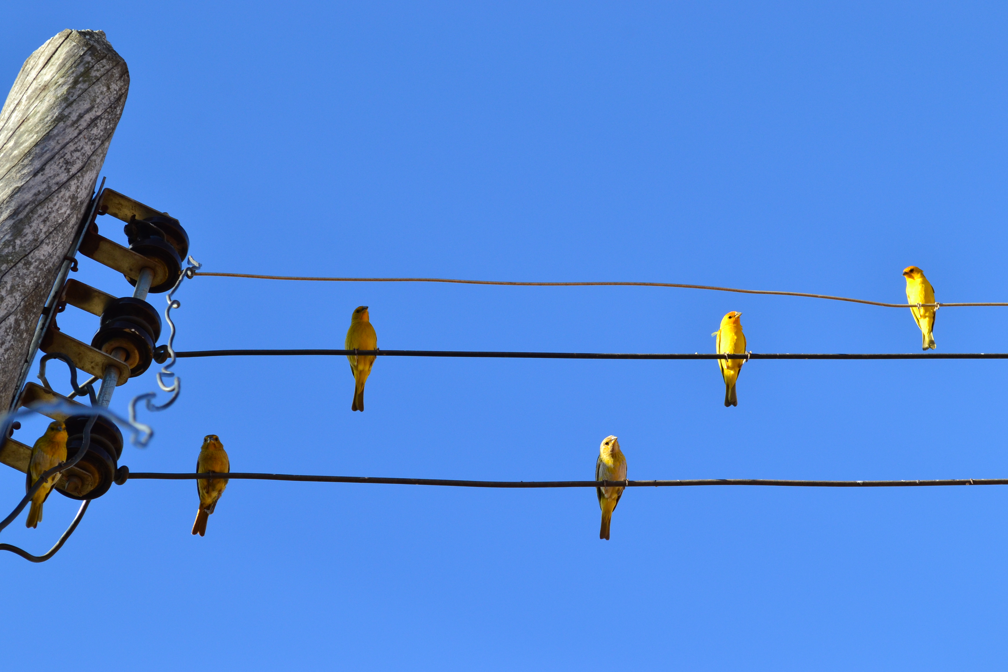 Listen to the birds, singin\' on a telephone line by mateusop on ...