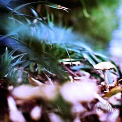 Spring Mushroom by PaulaMCollins