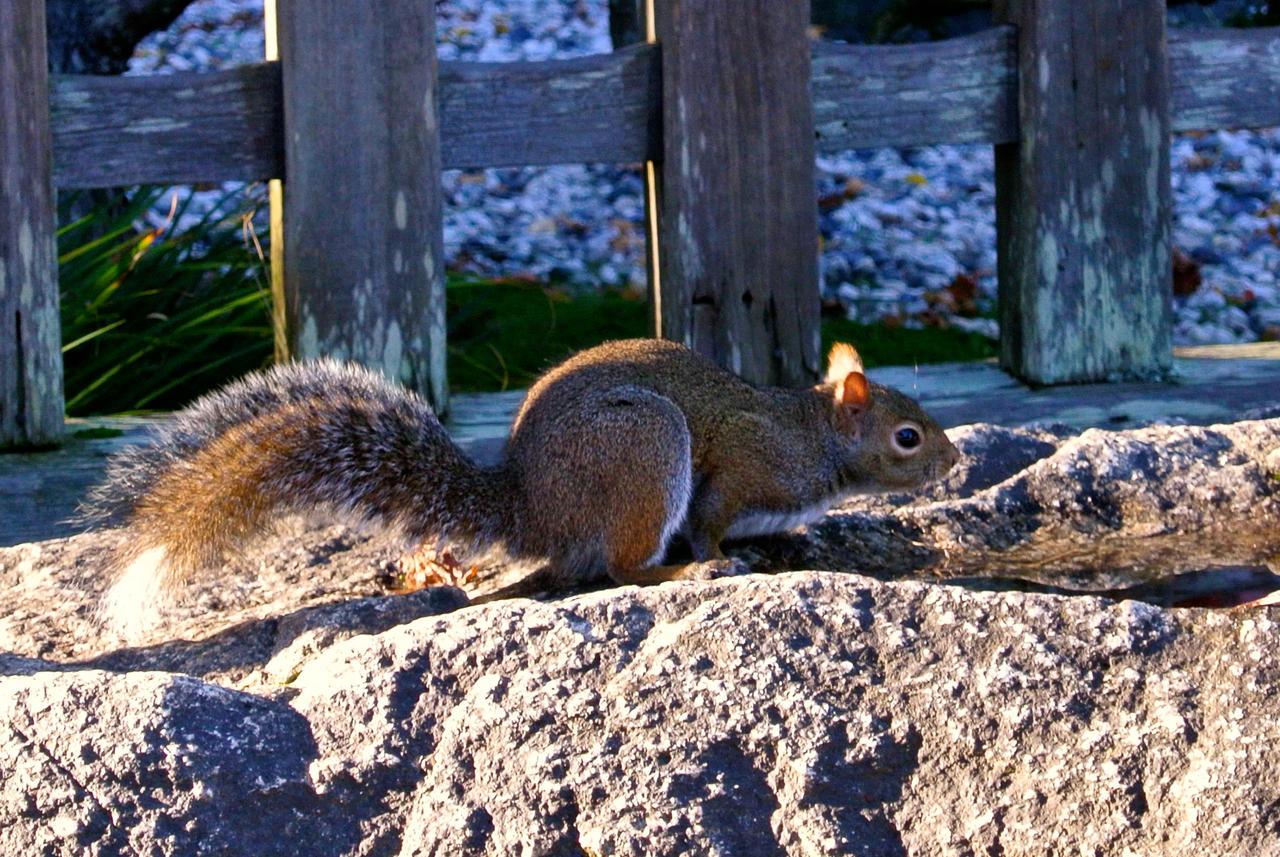 Squirrel by rafaelmcsilveira