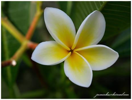 kwiaty 09