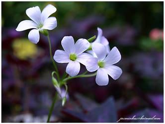 kwiaty 10