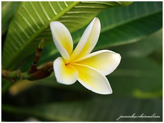 kwiaty 11