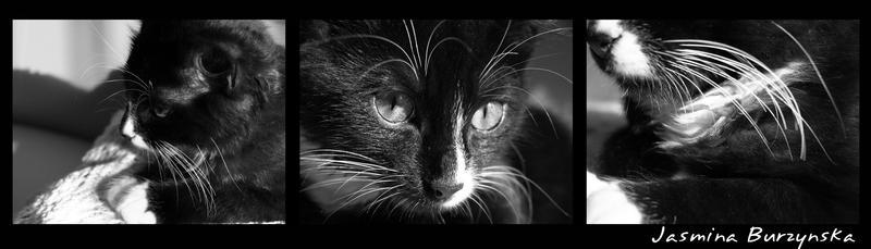 Fetka the cat