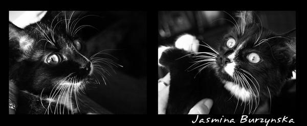 Fetka the cat 02 by jasminka