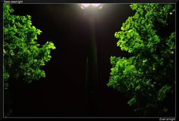 Trees need light