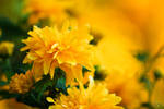 Spring_6004