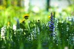 Spring_5963