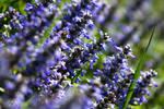 Spring_5989