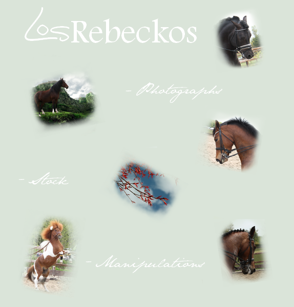 LosRebeckos's Profile Picture