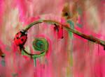 Candy bug