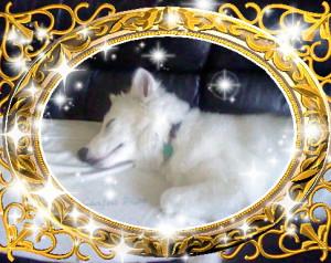 HuskeyNinja's Profile Picture