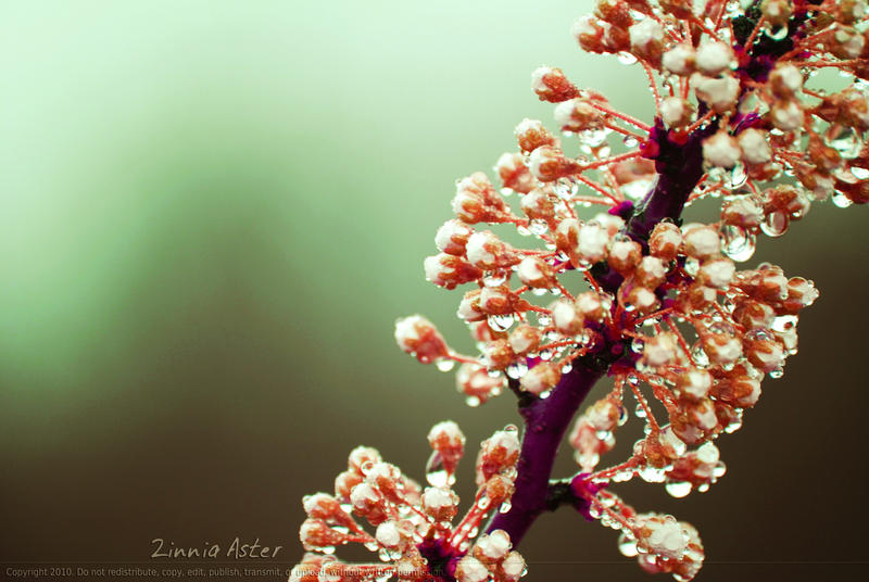 Spring To Life by Zinnia-Aster