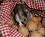 I want a nut