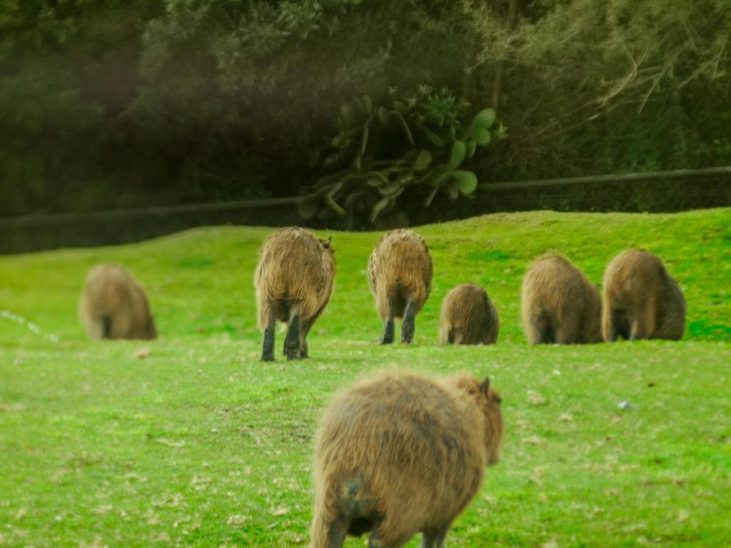 capybara by alvinflama