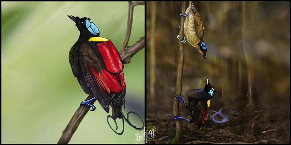 Bird of paradise animal drawing - photo#27