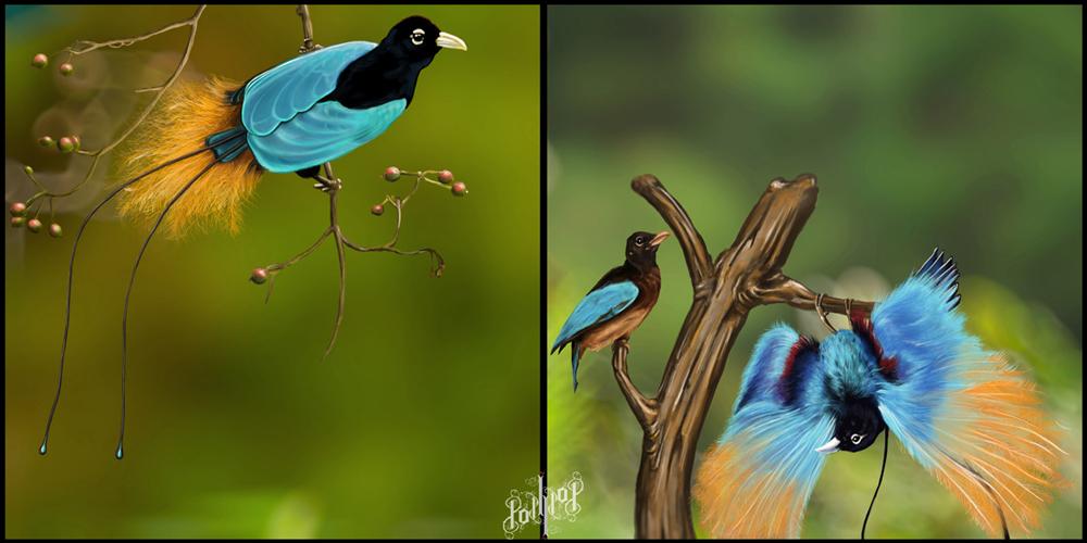 Bird of paradise animal drawing - photo#24