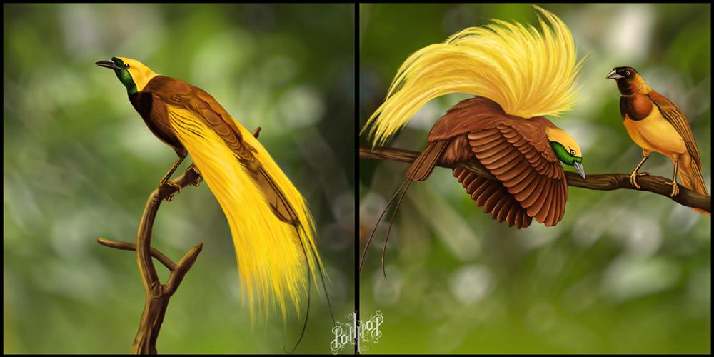 greater bird of paradise by pop ipop on deviantart