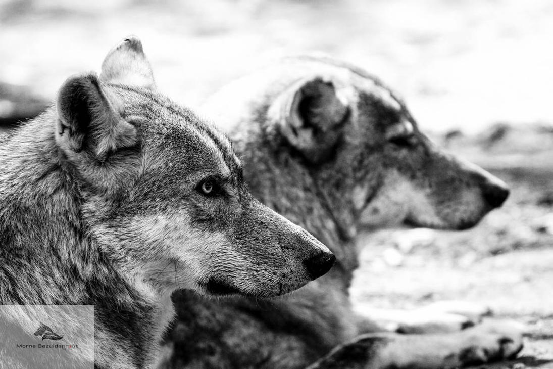 1 of my fav shots by Stray-Wolf-2