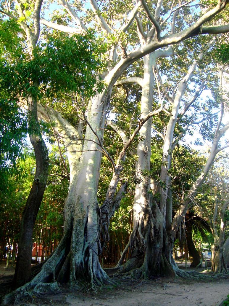 tree, big tree by dudc