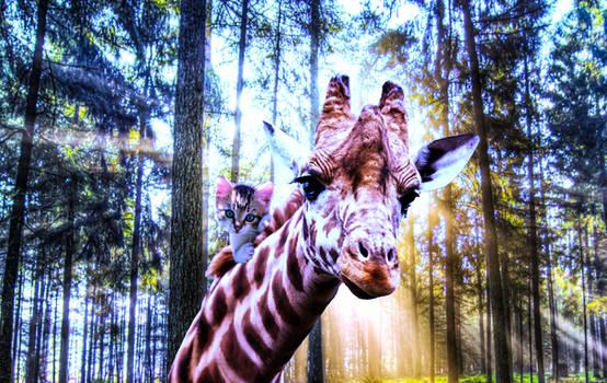 The Giraffe Rider