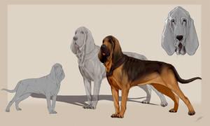 Bloodhound. Dog line \ FOR SALE \ BAZE \ P2U 