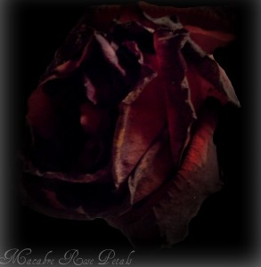 Macabre-Rose-Petals's Profile Picture