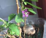 Fiorellino in cucina