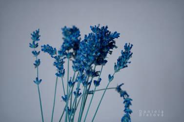 Lavender by destelart
