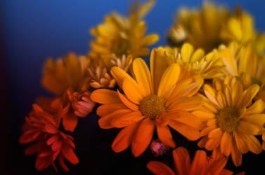 Flowers by destelart