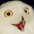 O Rly Owl Emote