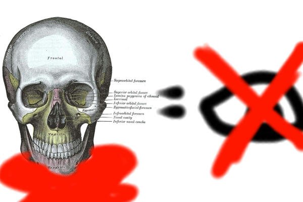 Human Anatomy - Skull by Baby-Bear-piccaso on DeviantArt