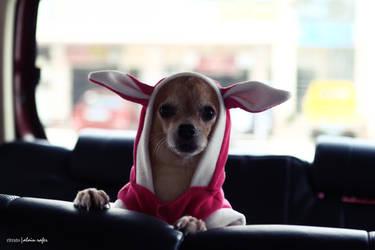Bunny by chiaki06