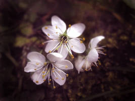 Sweet Spring by BlackbirdsDontLie