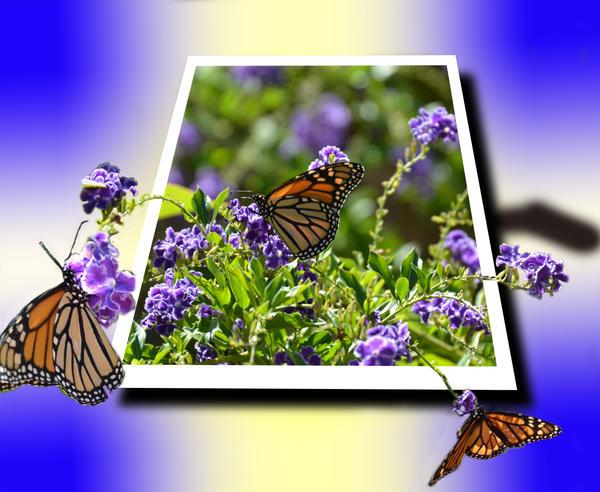 Butterflies OOB by MayEbony