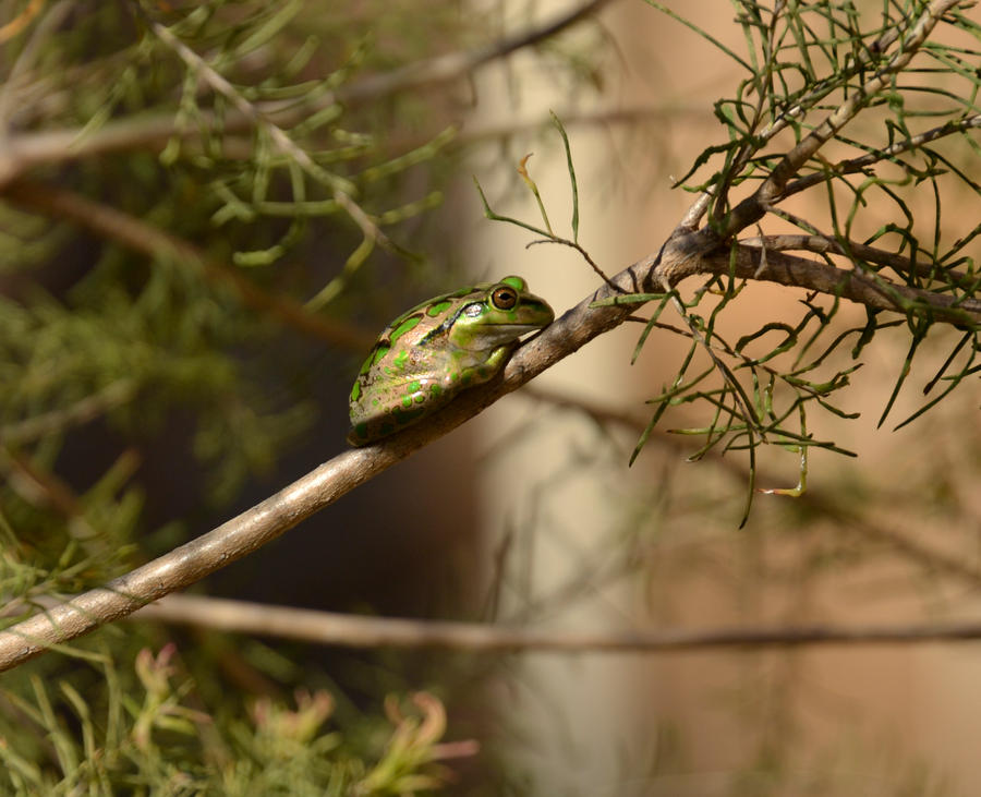 Motorbike Frog by MayEbony