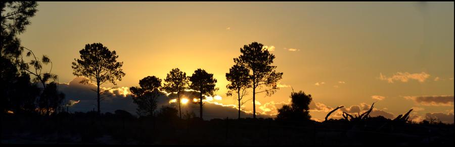 Wangara Plantation Sunset by MayEbony
