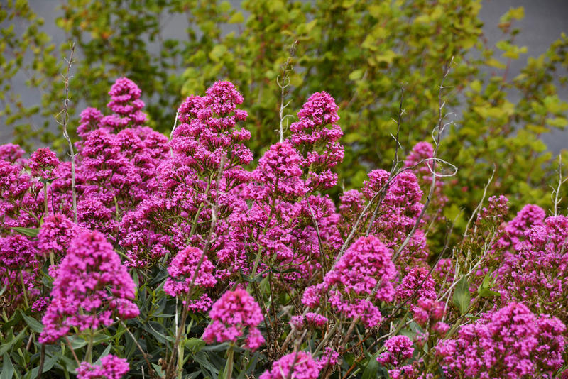 Pink flowers probably wild phlox by mayebony on deviantart pink flowers probably wild phlox by mayebony mightylinksfo Image collections