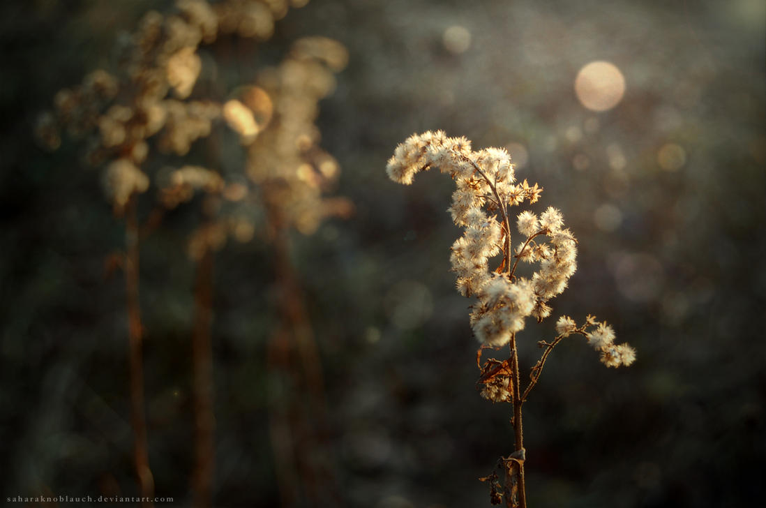 softly by SaharaKnoblauch