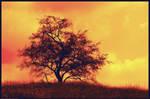 Global Warming by omergafla